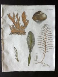 Encyclopedia Britannica 1801 Hand Col Print. Zoophytes. Coral 581.